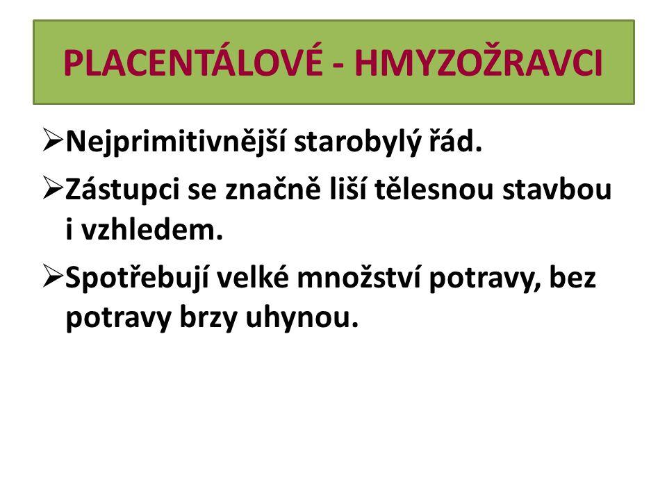 PLACENTÁLOVÉ - HMYZOŽRAVCI Zástupci: a)Krtek obecný  Žije v celé Evropě.