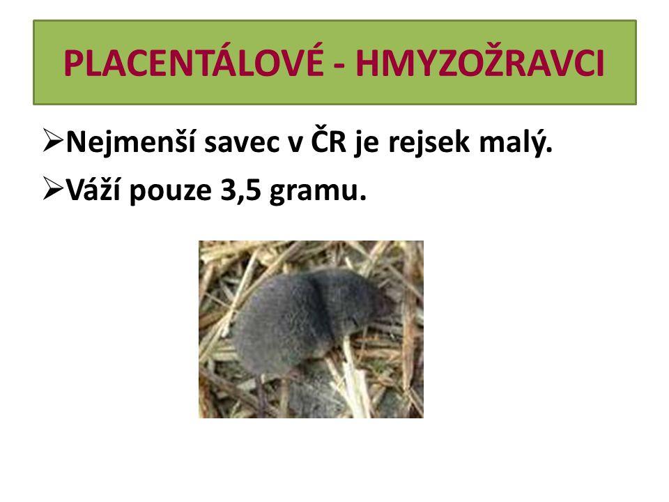PLACENTÁLOVÉ - HMYZOŽRAVCI  Nejmenší savec v ČR je rejsek malý.  Váží pouze 3,5 gramu.