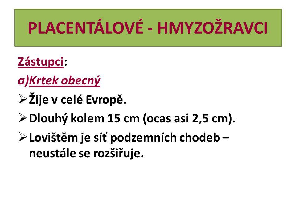 PLACENTÁLOVÉ - HMYZOŽRAVCI Zástupci: a)Krtek obecný  Žije v celé Evropě.  Dlouhý kolem 15 cm (ocas asi 2,5 cm).  Lovištěm je síť podzemních chodeb