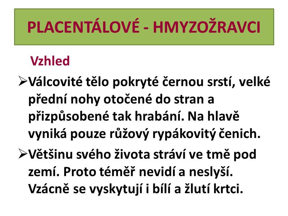 PLACENTÁLOVÉ - HMYZOŽRAVCI