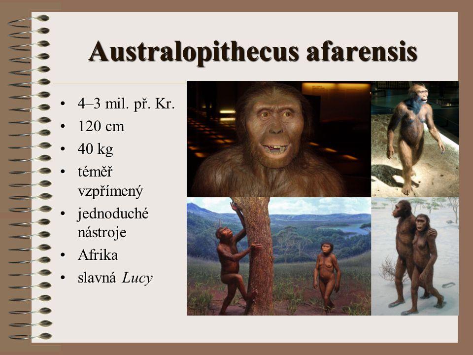 Australopithecus afarensis 4–3 mil. př. Kr.4–3 mil. př. Kr. 120 cm120 cm 40 kg40 kg téměř vzpřímenýtéměř vzpřímený jednoduché nástrojejednoduché nástr