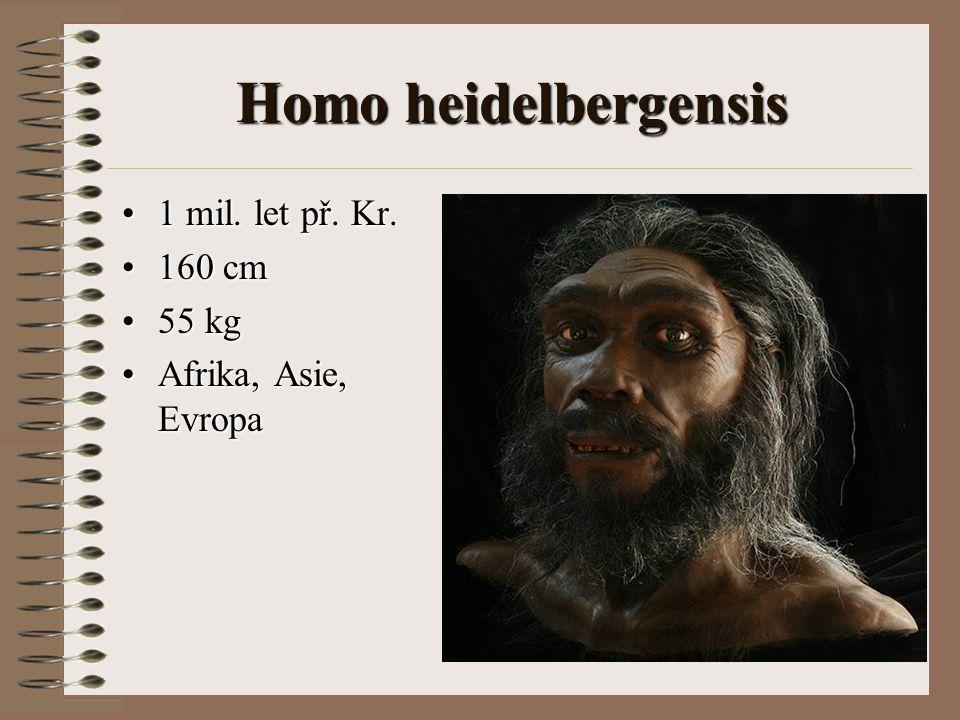 Homo heidelbergensis 1 mil. let př. Kr.1 mil. let př. Kr. 160 cm160 cm 55 kg55 kg Afrika, Asie, EvropaAfrika, Asie, Evropa