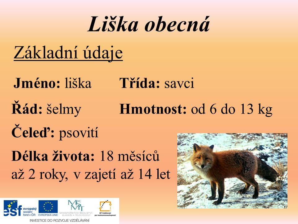 Liška obecná Základní údaje Jméno: liškaTřída: savci Řád: šelmy Čeleď: psovití Hmotnost: od 6 do 13 kg Délka života: 18 měsíců až 2 roky, v zajetí až 14 let