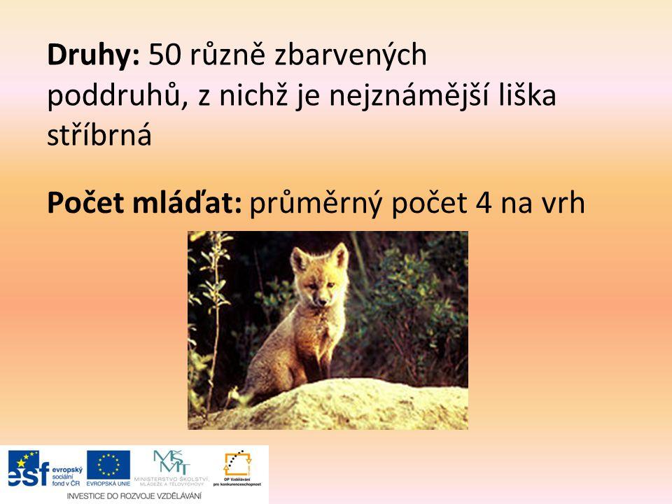 Liška má dobře vyvinutý: a) sluch b) čich c) zrak d) všechny tři smysly