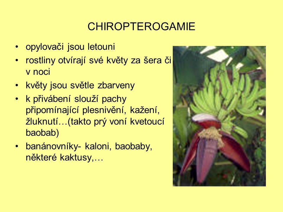 CHIROPTEROGAMIE opylovači jsou letouni rostliny otvírají své květy za šera či v noci květy jsou světle zbarveny k přivábení slouží pachy připomínající