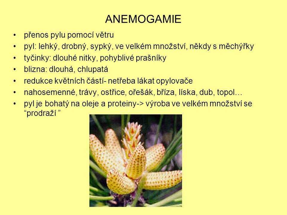 HYDROGAMIE přenos pylu s pomocí vody pyl: dlouhý, slepující se-> umožnění splývání, lepší zachytávání blizna : dlouhá opět redukované květní části vodní mor (r.Elodea), hvězdoše (r.Callitriche), růžkatce (r.Ceratophyllum), některé rdesty (r.