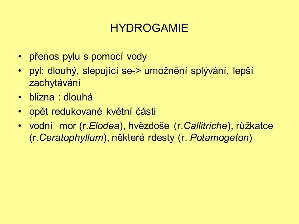 HYDROGAMIE přenos pylu s pomocí vody pyl: dlouhý, slepující se-> umožnění splývání, lepší zachytávání blizna : dlouhá opět redukované květní části vod