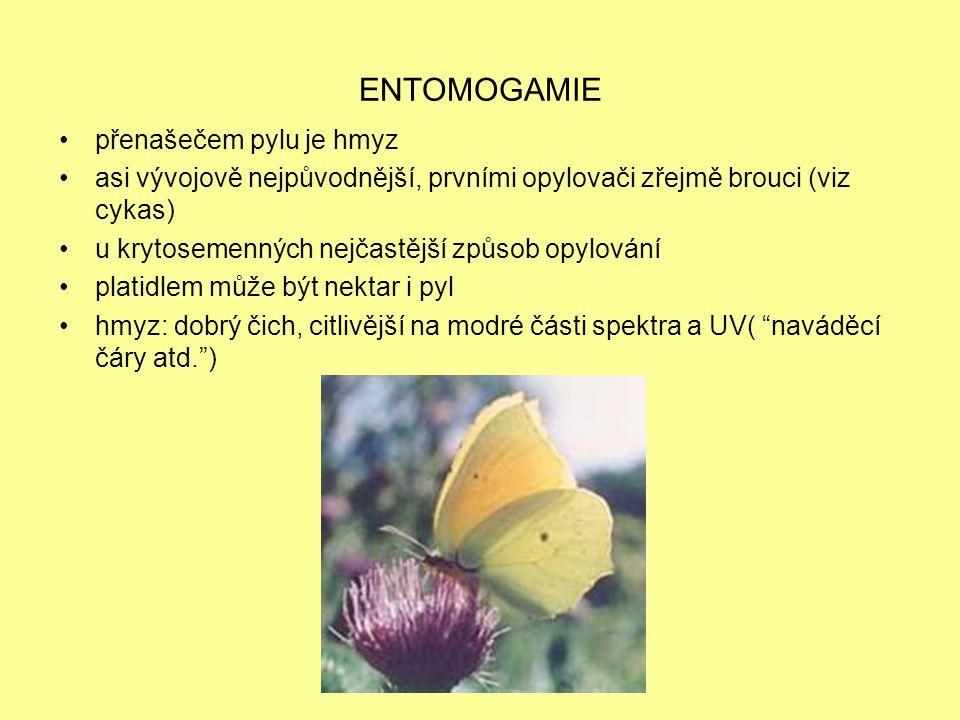 ENTOMOGAMIE přenašečem pylu je hmyz asi vývojově nejpůvodnější, prvními opylovači zřejmě brouci (viz cykas) u krytosemenných nejčastější způsob opylov