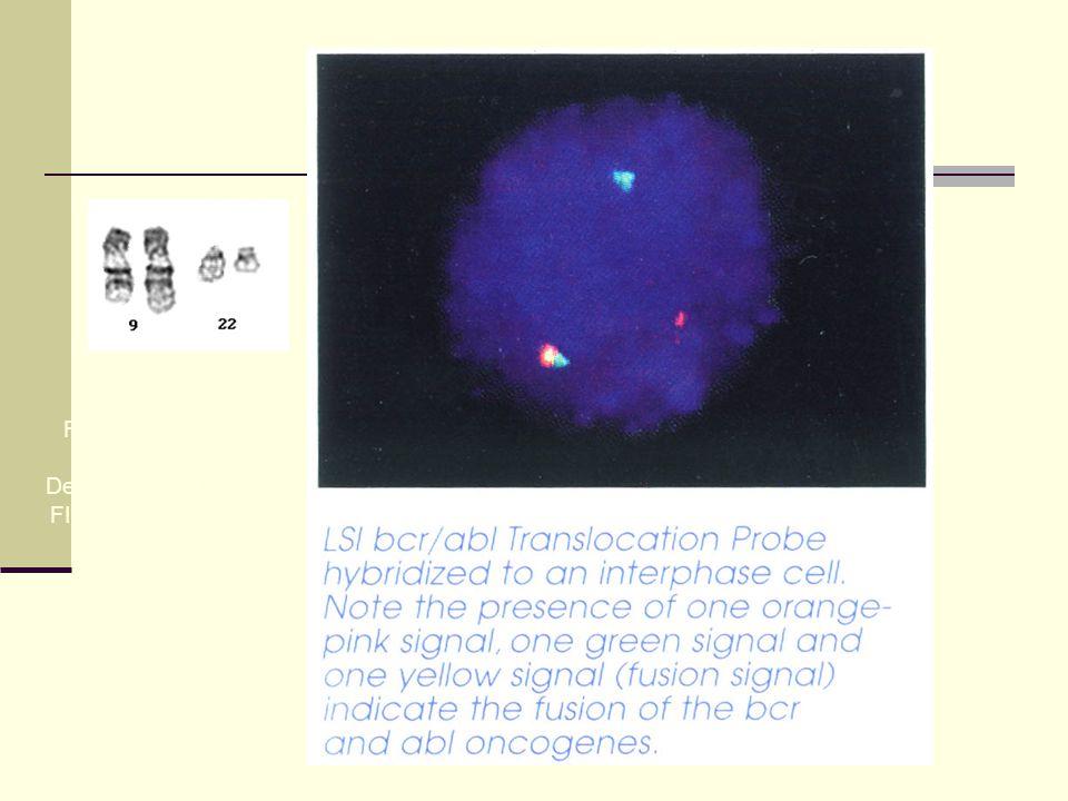 Wysis katalog 1996/97 Fuzovaný gen brc/abl Detekce metodou FISH v interfázní buňce