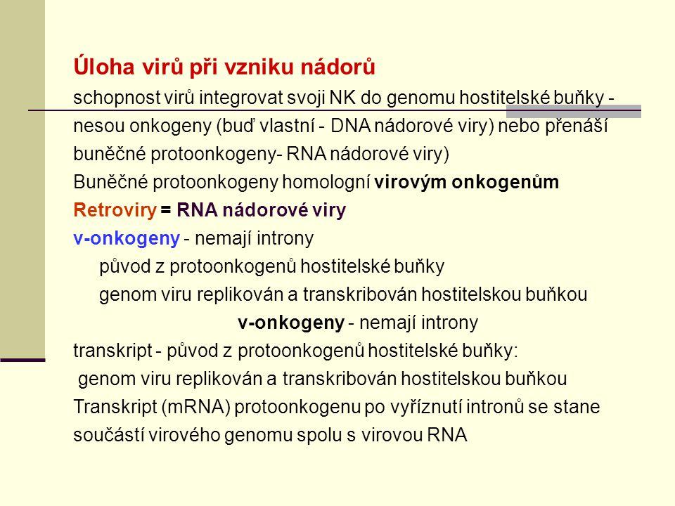 Úloha virů při vzniku nádorů schopnost virů integrovat svoji NK do genomu hostitelské buňky - nesou onkogeny (buď vlastní - DNA nádorové viry) nebo přenáší buněčné protoonkogeny- RNA nádorové viry) Buněčné protoonkogeny homologní virovým onkogenům Retroviry = RNA nádorové viry v-onkogeny - nemají introny původ z protoonkogenů hostitelské buňky genom viru replikován a transkribován hostitelskou buňkou v-onkogeny - nemají introny transkript - původ z protoonkogenů hostitelské buňky: genom viru replikován a transkribován hostitelskou buňkou Transkript (mRNA) protoonkogenu po vyříznutí intronů se stane součástí virového genomu spolu s virovou RNA