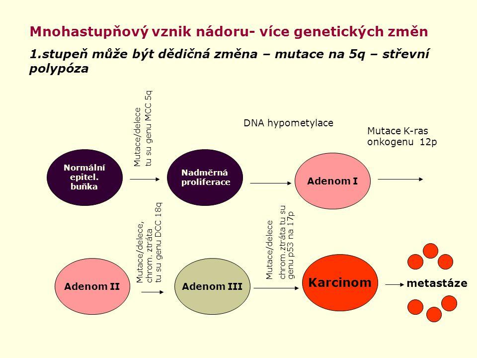 Normální epitel. buňka Nadměrná proliferace Adenom I Adenom IIAdenom III Karcinom Mutace/delece tu su genu MCC 5q DNA hypometylace Mutace K-ras onkoge