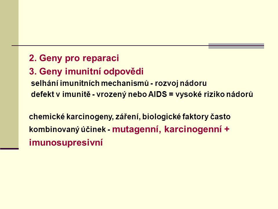2. Geny pro reparaci 3. Geny imunitní odpovědi selhání imunitních mechanismů - rozvoj nádoru defekt v imunitě - vrozený nebo AIDS = vysoké riziko nádo