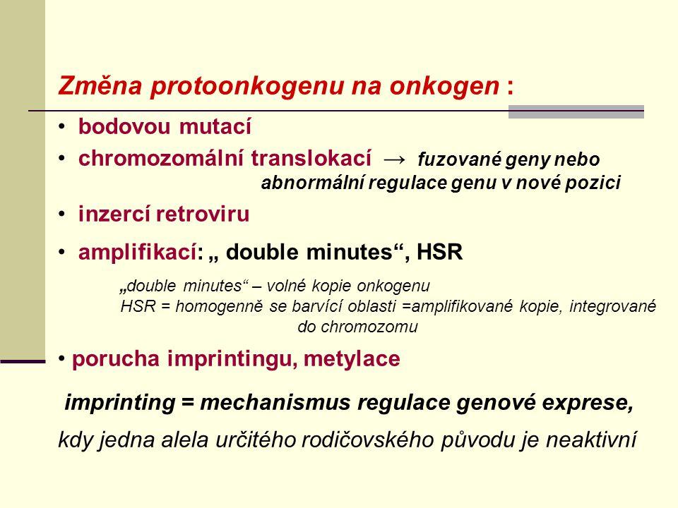 """Změna protoonkogenu na onkogen : bodovou mutací chromozomální translokací → fuzované geny nebo abnormální regulace genu v nové pozici inzercí retroviru amplifikací: """" double minutes , HSR """" double minutes – volné kopie onkogenu HSR = homogenně se barvící oblasti =amplifikované kopie, integrované do chromozomu porucha imprintingu, metylace imprinting = mechanismus regulace genové exprese, kdy jedna alela určitého rodičovského původu je neaktivní"""