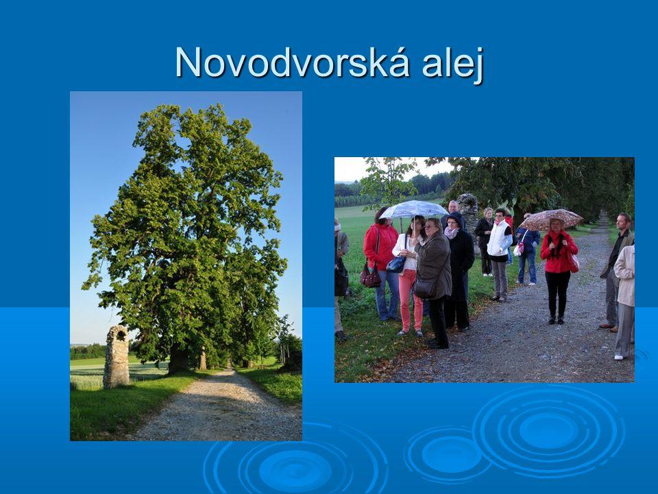 Novodvorská alej