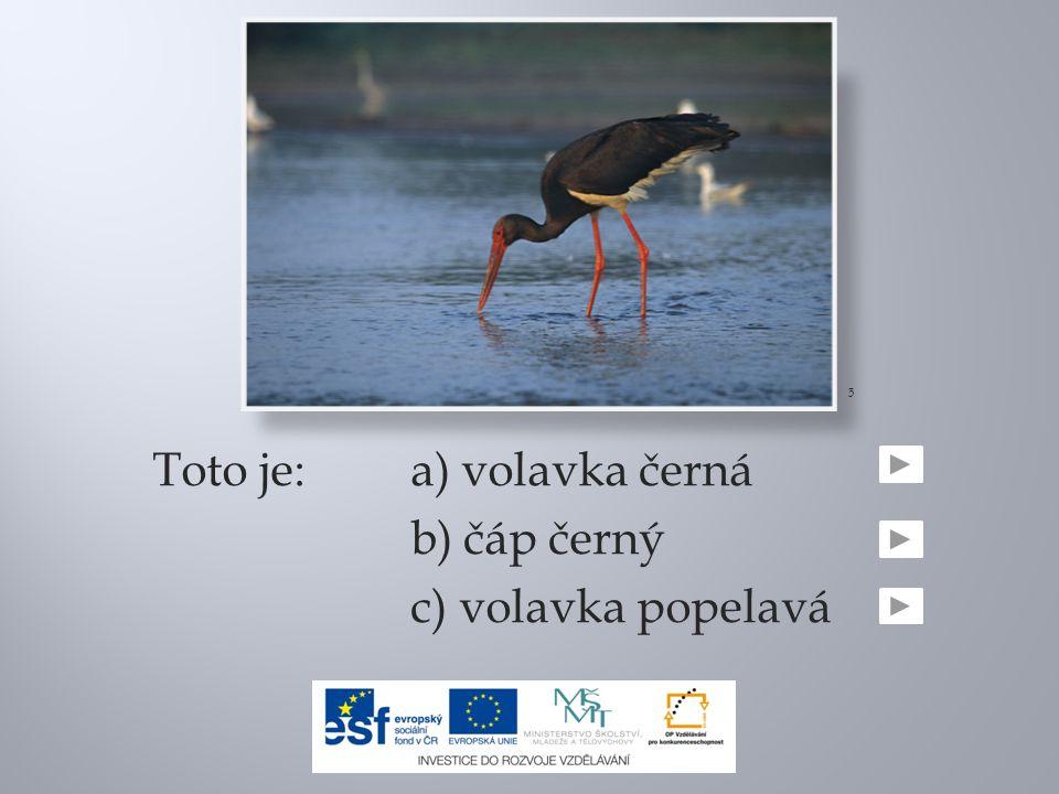 Toto je:a) volavka černá b) čáp černý c) volavka popelavá 5