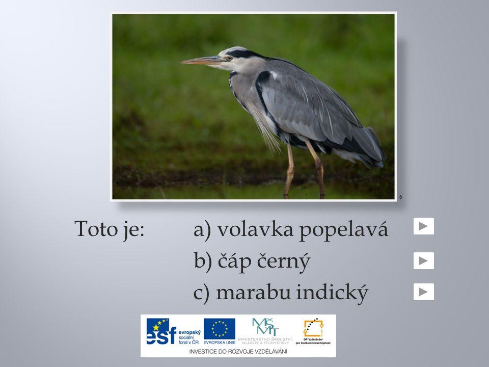 Toto je:a) volavka popelavá b) čáp černý c) marabu indický 6