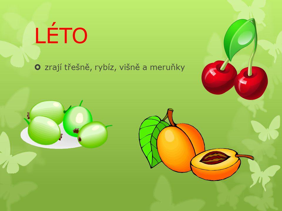 LÉTO  zrají třešně, rybíz, višně a meruňky