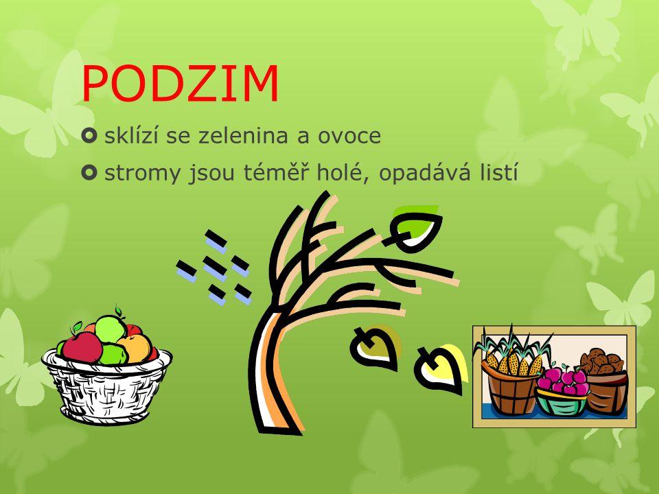 PODZIM  sklízí se zelenina a ovoce  stromy jsou téměř holé, opadává listí
