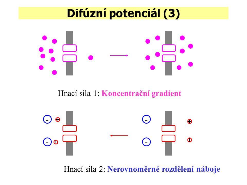 Difúzní potenciál (3) Hnací síla 1: Koncentrační gradient + - - + + - - + Hnací síla 2: Nerovnoměrné rozdělení náboje