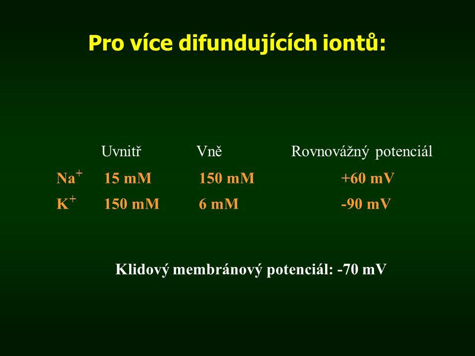 Pro více difundujících iontů: Uvnitř Vně Rovnovážný potenciál Na + 15 mM150 mM+60 mV K + 150 mM6 mM-90 mV Klidový membránový potenciál: -70 mV