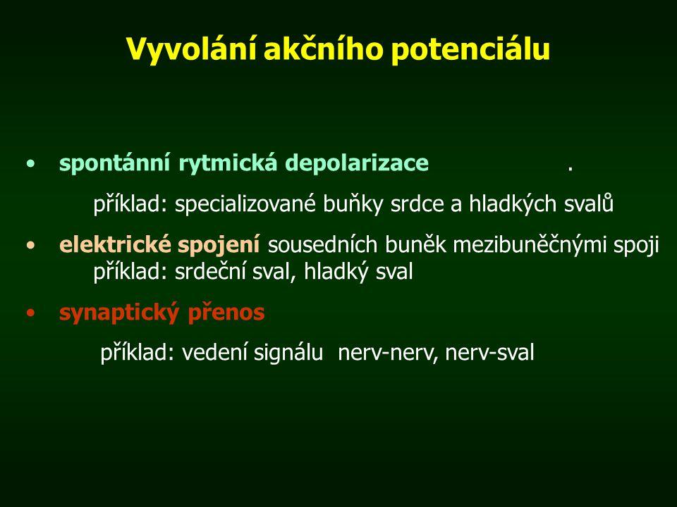 Vyvolání akčního potenciálu spontánní rytmická depolarizace. příklad: specializované buňky srdce a hladkých svalů elektrické spojení sousedních buněk