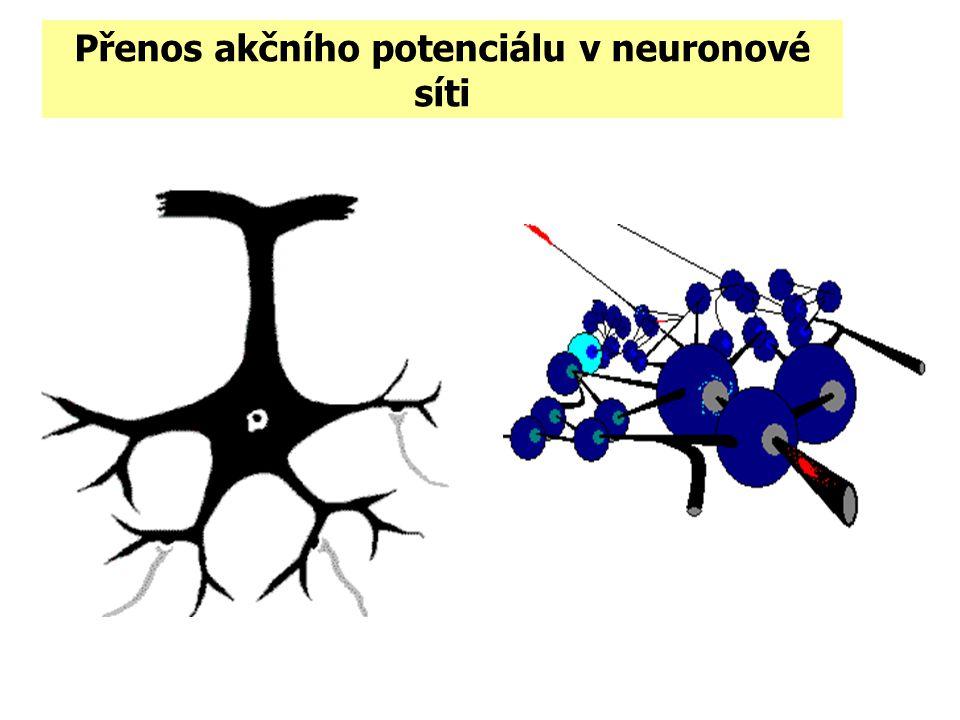 Přenos akčního potenciálu v neuronové síti