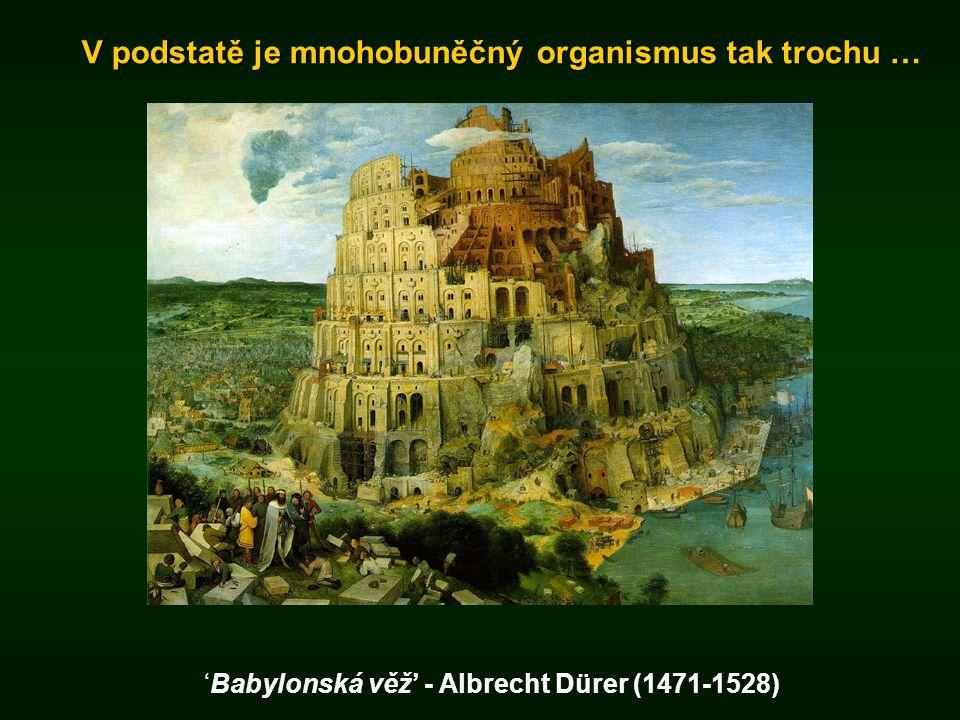 V podstatě je mnohobuněčný organismus tak trochu … 'Babylonská věž' - Albrecht Dürer (1471-1528)