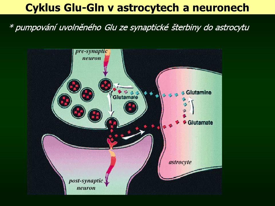Cyklus Glu-Gln v astrocytech a neuronech * pumpování uvolněného Glu ze synaptické šterbiny do astrocytu
