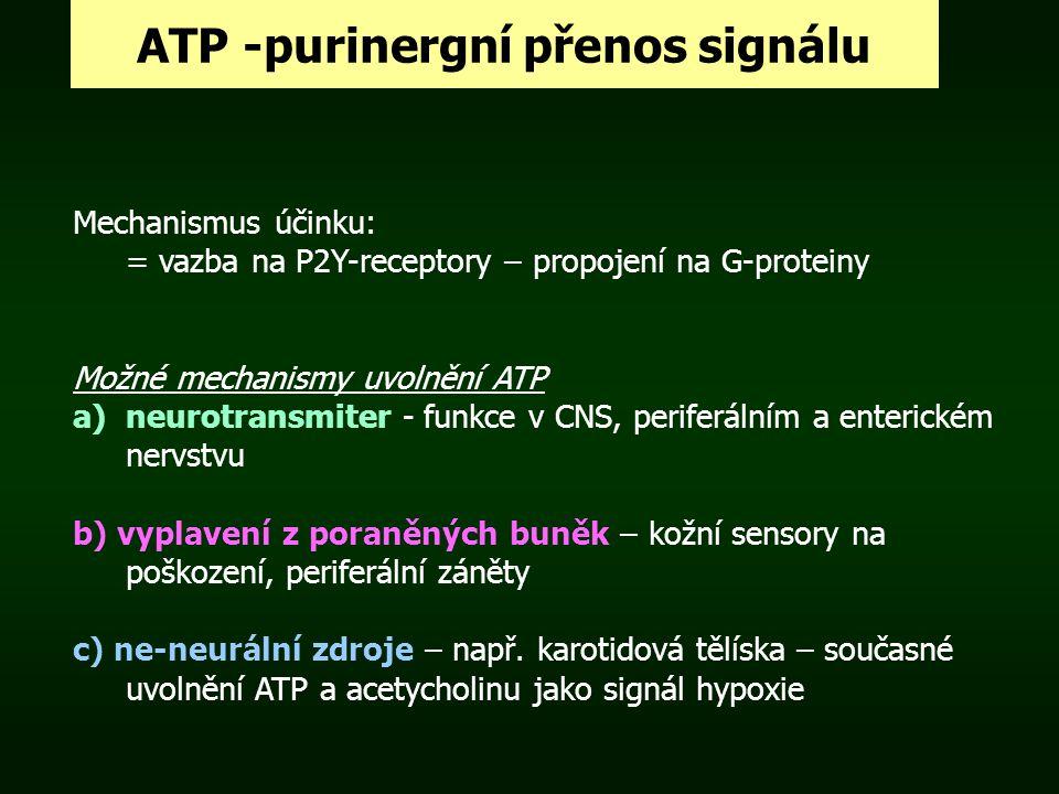 ATP -purinergní přenos signálu Mechanismus účinku: = vazba na P2Y-receptory – propojení na G-proteiny Možné mechanismy uvolnění ATP a)neurotransmiter