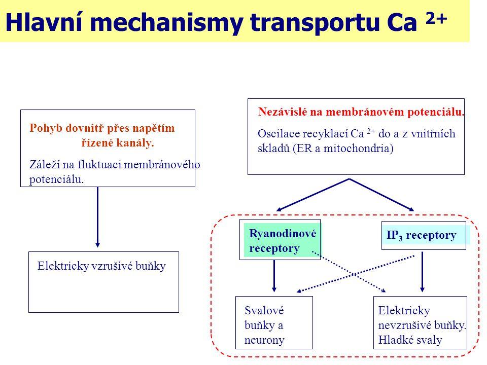 Pohyb dovnitř přes napětím řízené kanály. Záleží na fluktuaci membránového potenciálu. Elektricky vzrušivé buňky Nezávislé na membránovém potenciálu.