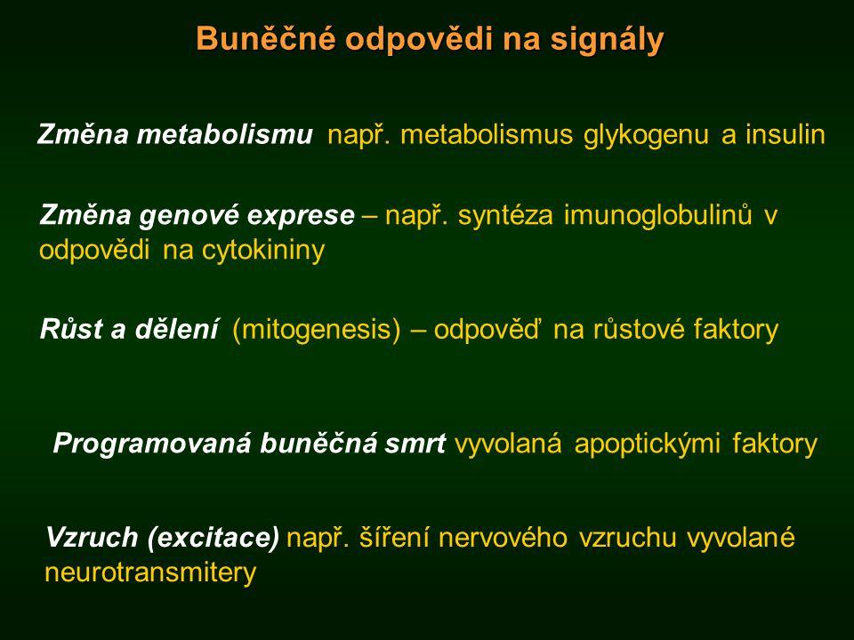 Buněčné odpovědi na signály Změna metabolismu např. metabolismus glykogenu a insulin Vzruch (excitace) např. šíření nervového vzruchu vyvolané neurotr