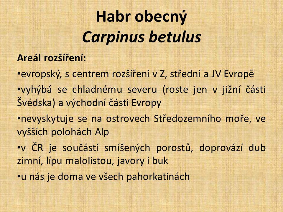 Habr obecný Carpinus betulus Areál rozšíření: evropský, s centrem rozšíření v Z, střední a JV Evropě vyhýbá se chladnému severu (roste jen v jižní části Švédska) a východní části Evropy nevyskytuje se na ostrovech Středozemního moře, ve vyšších polohách Alp v ČR je součástí smíšených porostů, doprovází dub zimní, lípu malolistou, javory i buk u nás je doma ve všech pahorkatinách