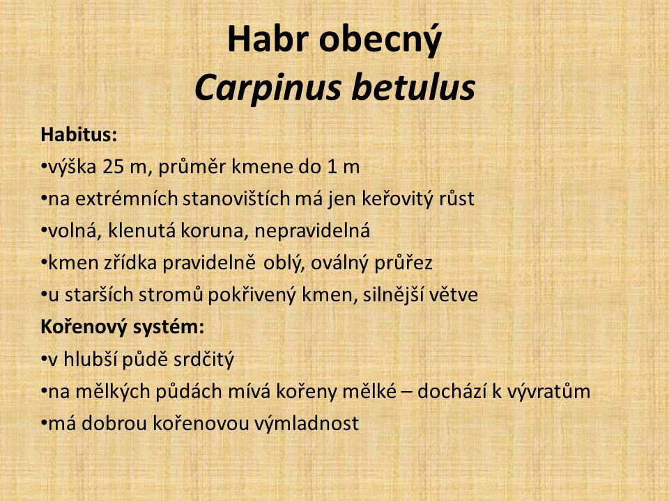 Habr obecný Carpinus betulus Habitus: výška 25 m, průměr kmene do 1 m na extrémních stanovištích má jen keřovitý růst volná, klenutá koruna, nepravidelná kmen zřídka pravidelně oblý, oválný průřez u starších stromů pokřivený kmen, silnější větve Kořenový systém: v hlubší půdě srdčitý na mělkých půdách mívá kořeny mělké – dochází k vývratům má dobrou kořenovou výmladnost