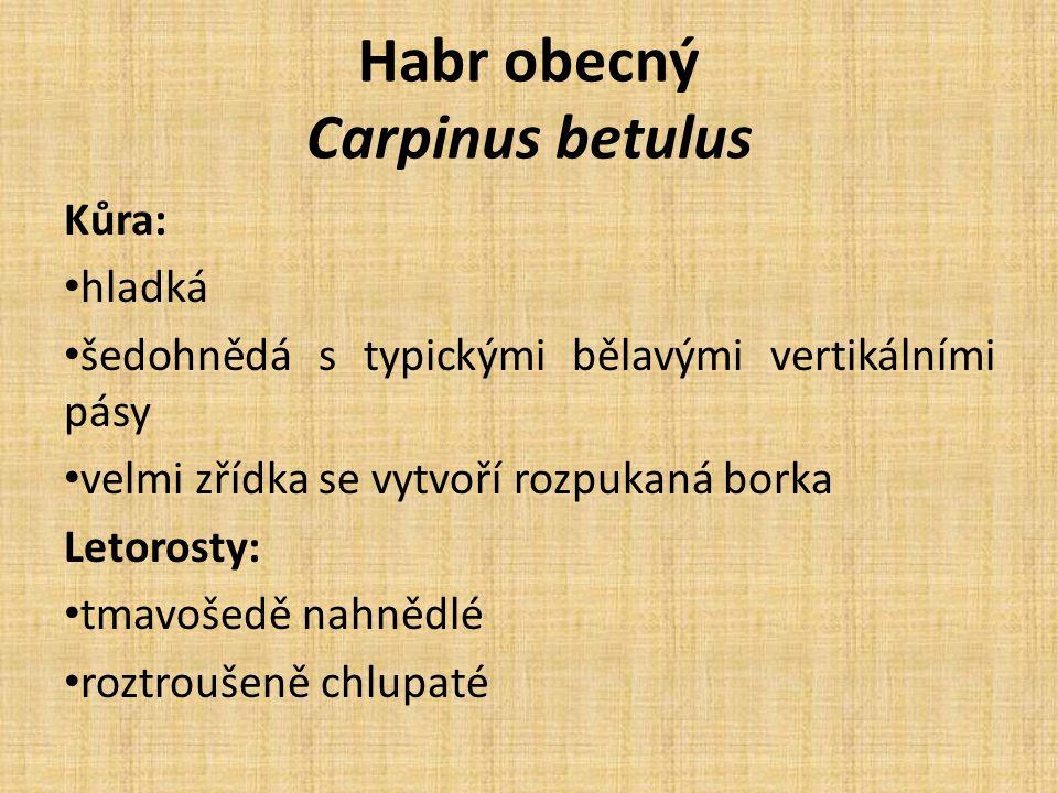 Habr obecný Carpinus betulus Kůra: hladká šedohnědá s typickými bělavými vertikálními pásy velmi zřídka se vytvoří rozpukaná borka Letorosty: tmavošedě nahnědlé roztroušeně chlupaté
