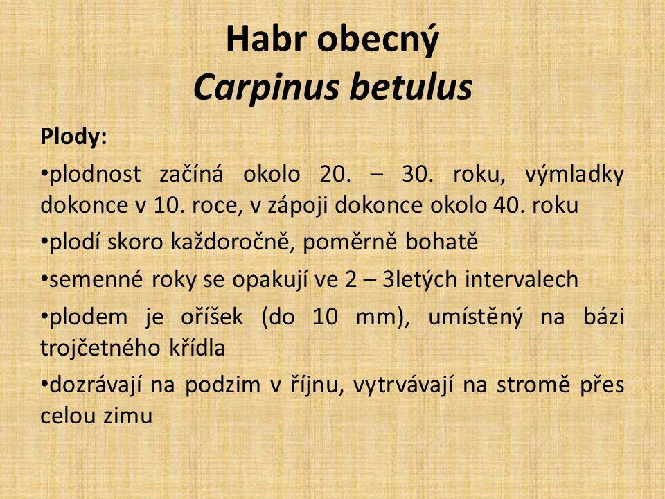 Habr obecný Carpinus betulus Plody: plodnost začíná okolo 20. – 30. roku, výmladky dokonce v 10. roce, v zápoji dokonce okolo 40. roku plodí skoro kaž