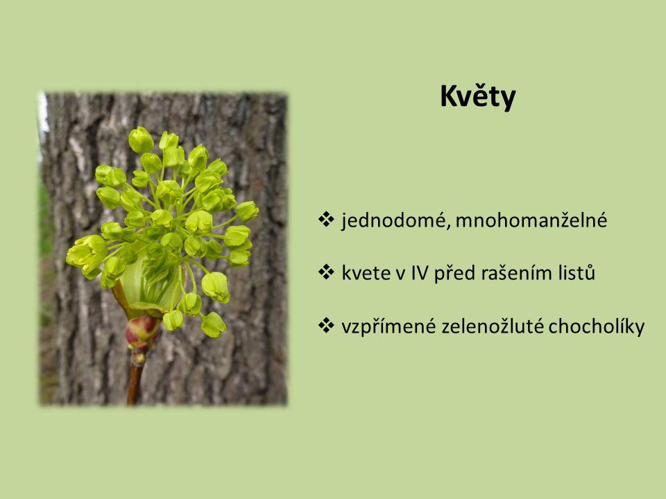 Květy  jednodomé, mnohomanželné  kvete v IV před rašením listů  vzpřímené zelenožluté chocholíky