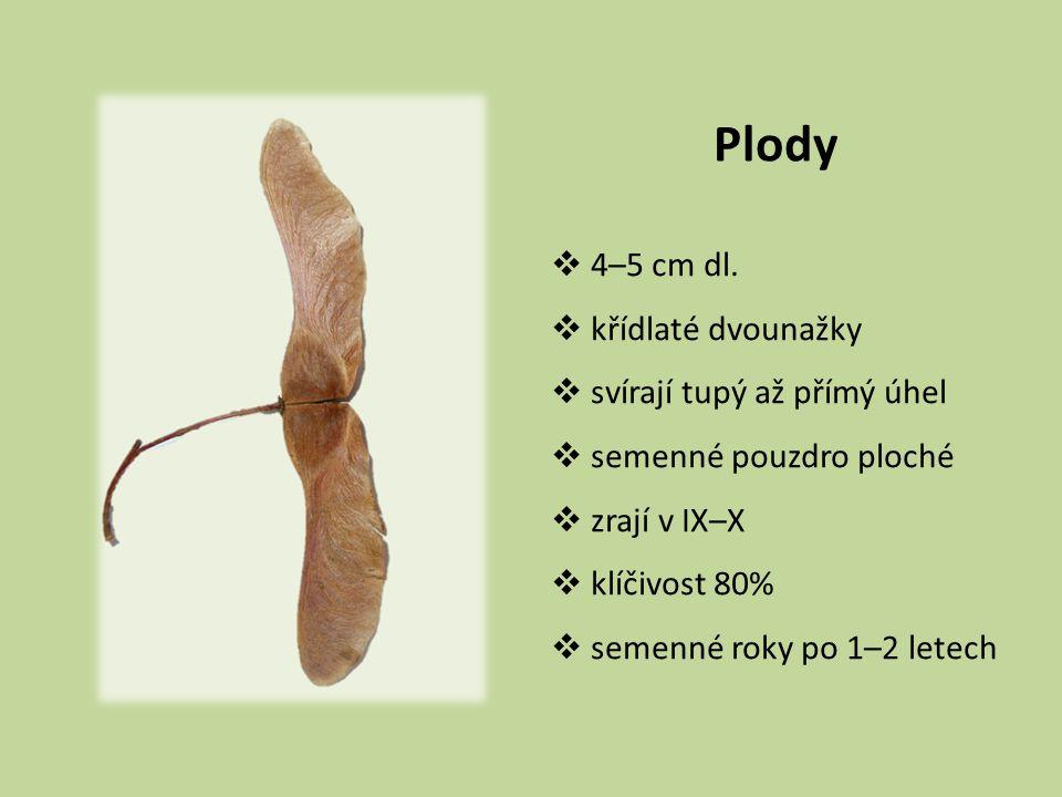 Plody  4–5 cm dl.