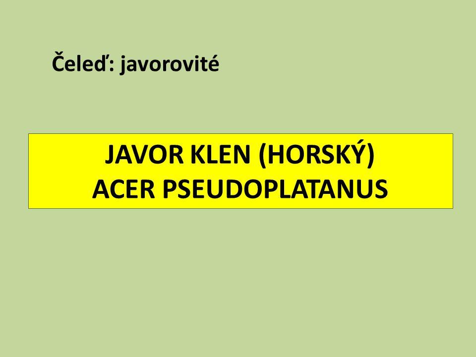 JAVOR KLEN (HORSKÝ) ACER PSEUDOPLATANUS Čeleď: javorovité