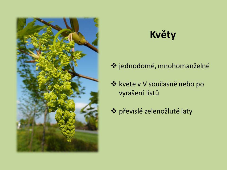 Květy  jednodomé, mnohomanželné  kvete v V současně nebo po vyrašení listů  převislé zelenožluté laty