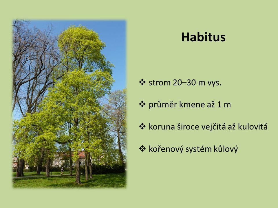 Habitus  strom 20–30 m vys.