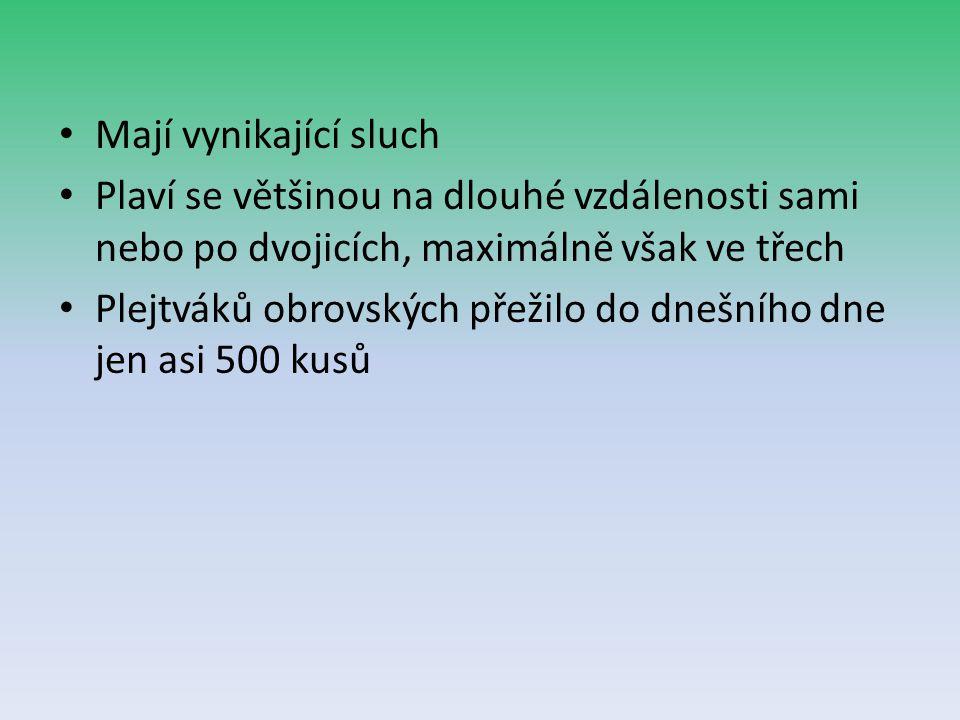 Mají vynikající sluch Plaví se většinou na dlouhé vzdálenosti sami nebo po dvojicích, maximálně však ve třech Plejtváků obrovských přežilo do dnešního dne jen asi 500 kusů