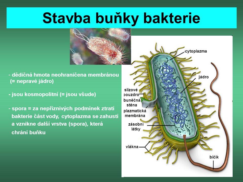 Stavba buňky bakterie cytoplazma jádro bičík vlákna zásobní látky plazmatická membrána slizové pouzdro buněčná stěna - dědičná hmota neohraničena memb