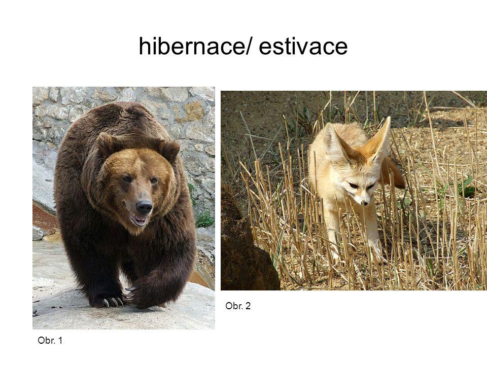 hibernace/ estivace Obr. 1 Obr. 2