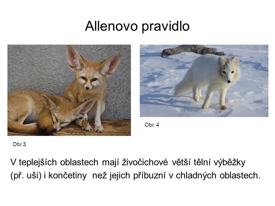 Allenovo pravidlo V teplejších oblastech mají živočichové větší tělní výběžky (př.