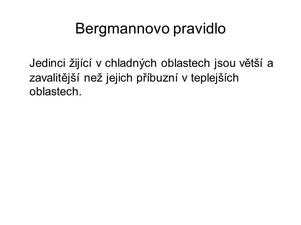 Bergmannovo pravidlo Jedinci žijící v chladných oblastech jsou větší a zavalitější než jejich příbuzní v teplejších oblastech.