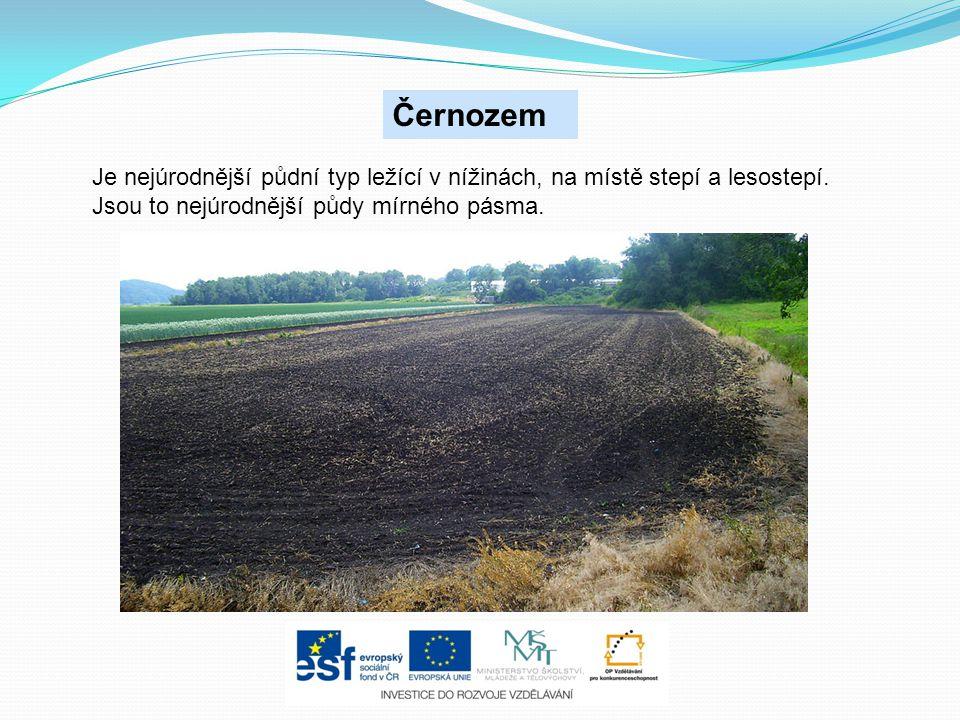 Černozem Je nejúrodnější půdní typ ležící v nížinách, na místě stepí a lesostepí. Jsou to nejúrodnější půdy mírného pásma.