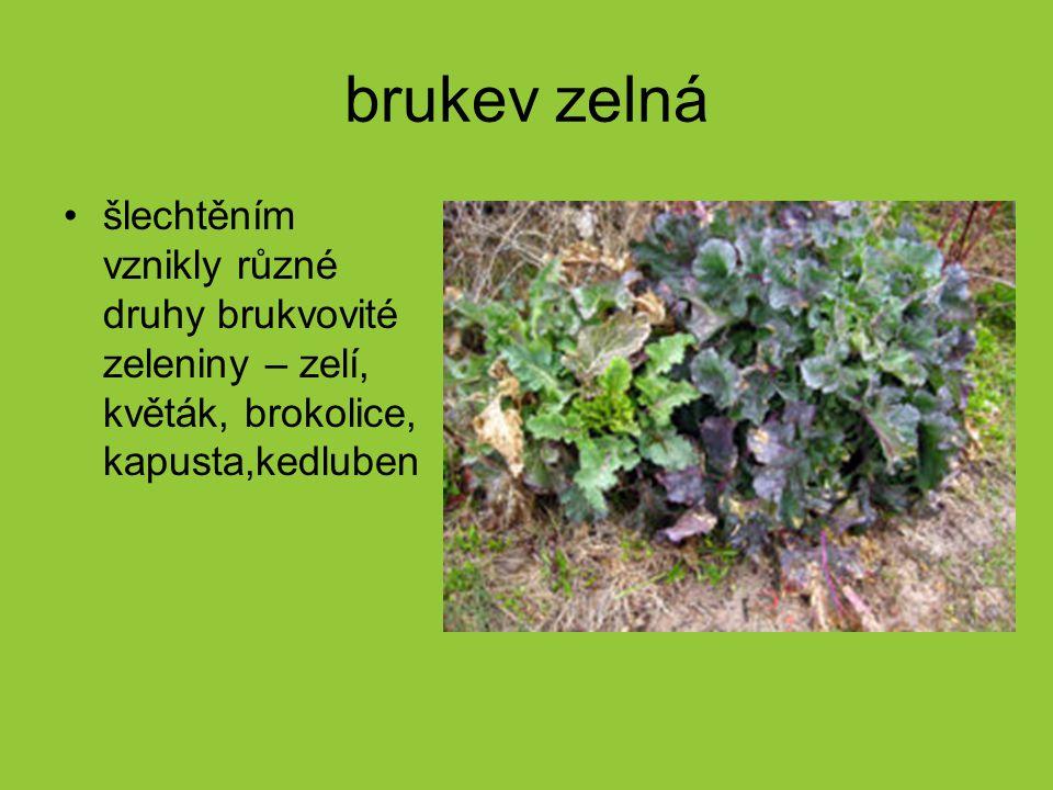 brukev zelná šlechtěním vznikly různé druhy brukvovité zeleniny – zelí, květák, brokolice, kapusta,kedluben