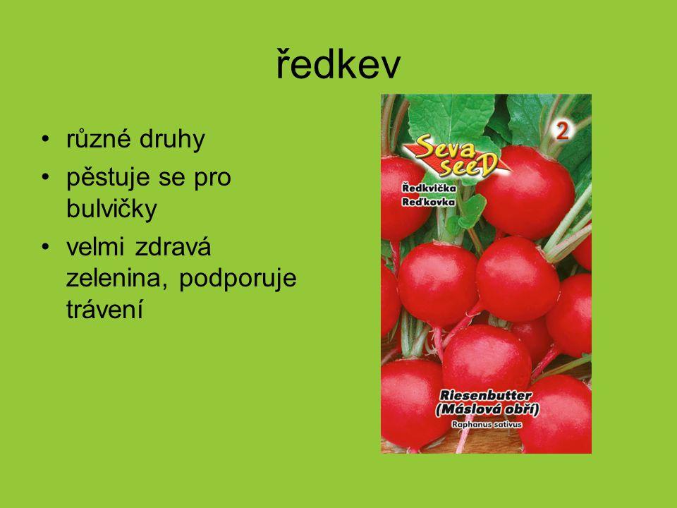 ředkev různé druhy pěstuje se pro bulvičky velmi zdravá zelenina, podporuje trávení