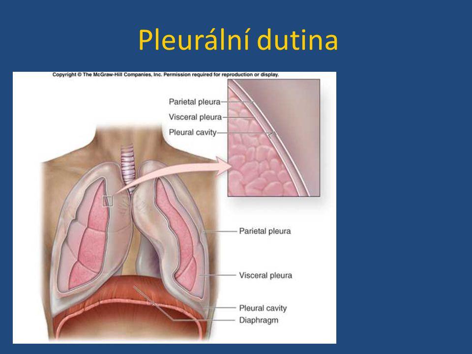 Pleurální dutina