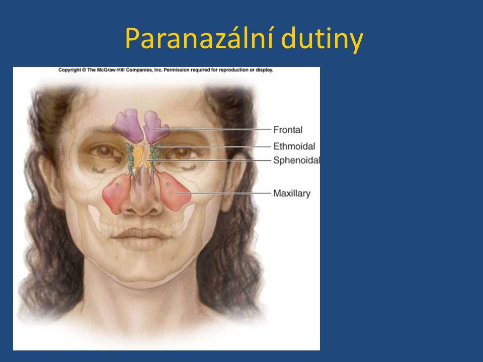 Paranazální dutiny
